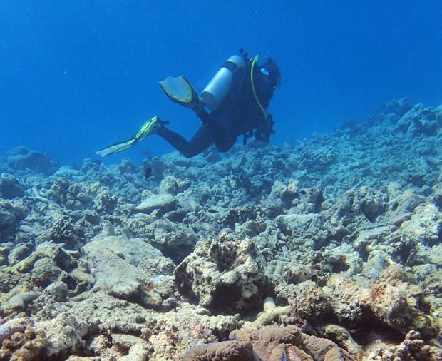 Cientistas voltam a denunciar situação da Barreira de Corais na Austrália