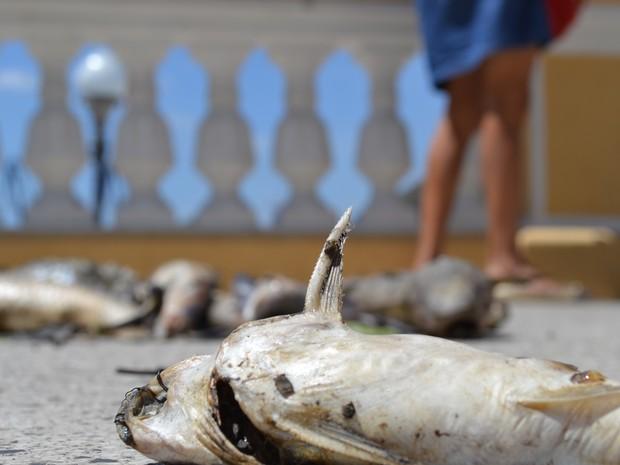 Peixes mortos são despejados nas escadas do Palácio Anchieta
