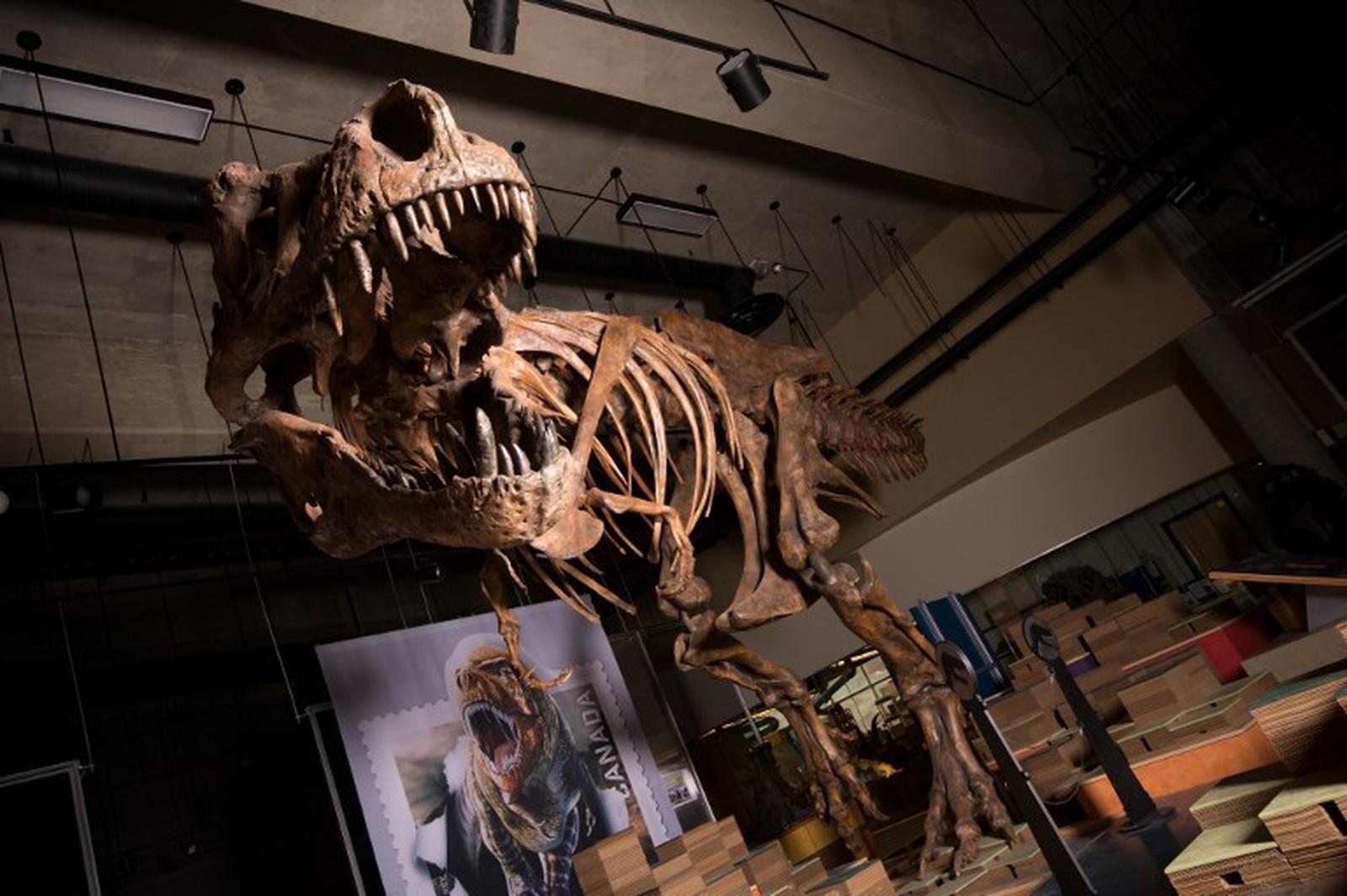 Tiranossauro Rex encontrado no Canadá em 1991 é o maior do mundo