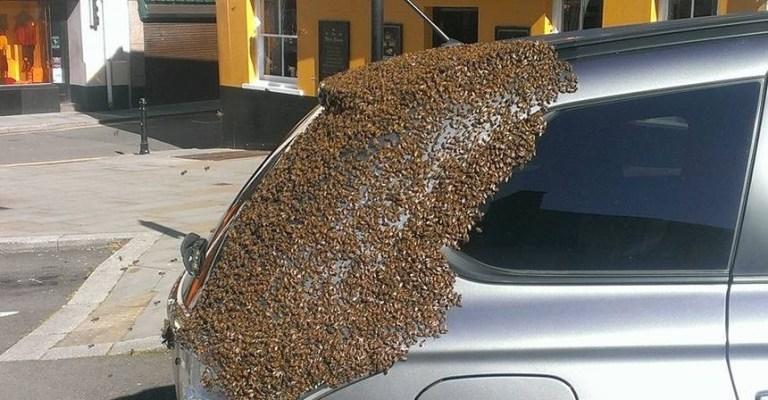 Abelha Rainha fica trancada dentro de carro e é perseguido por 20.000 abelhas